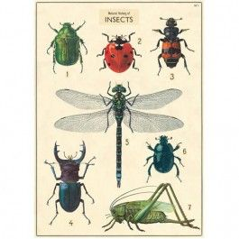 cavallini & co poster - insect chart | ilovespeelgoed.nl